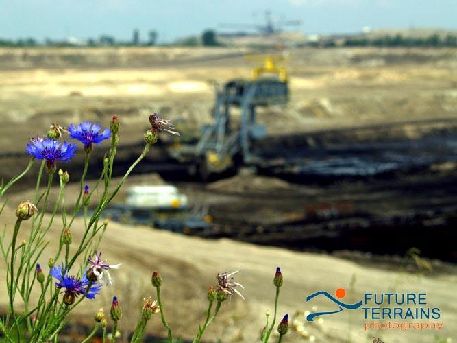 Lignite surface mine with cornflower, Poland