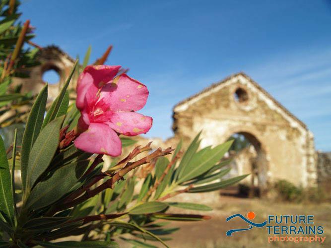 Oleander flower and mining heritage Spain