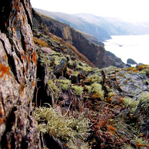 Raising awareness of local biodiversity, Eden Project-English Nature; UK