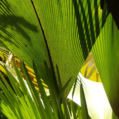 Tropical forest survey techniques Seychelles