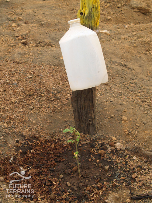 Galapagos Island quarry, drip irrigation for tree seedling, Ecuador