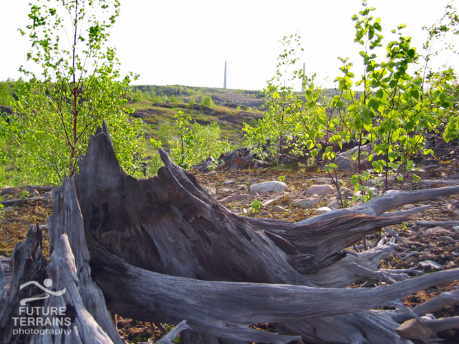Naturally recolonising trees among the remnants of a previous generation, Sudbury, Ontario
