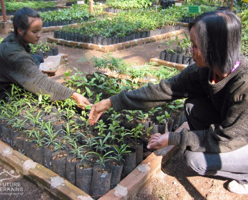 FORRU tree nursery, Thailand